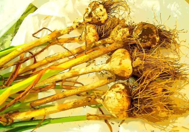 GarlicPS